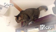 #163 オリジナル必勝法セレクション/谷村ひとしのQ&A/動画