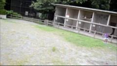 実録!!ほんとにあった恐怖の投稿映像 36/動画