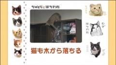 #11 猫も木から落ちる/動画