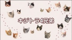 #32 ちゃとらとはちわれ保育園【キジトラ4兄弟】/動画
