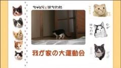#9 我が家の大運動会/動画