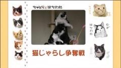 #20 猫じゃらし争奪戦/動画