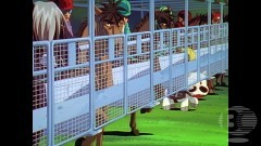 第60話 史上最大のレース!!/動画