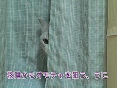 #7 猫らしい動きをしてみよう/動画