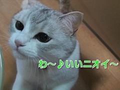 """#23 週末限定""""猫缶の日""""&猫ボクシング/動画"""