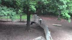 #3 動物園/動画