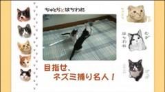 #6 目指せ、ネズミ捕り名人!/動画