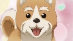 第12話 いくさの子犬/動画