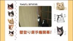 #27 壁登り選手権開幕!/動画