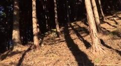 流出心霊動画 呪われたスマホ動画編/動画