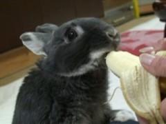 #2 よつばの一日バナナ篇&うさんぽ�@/動画