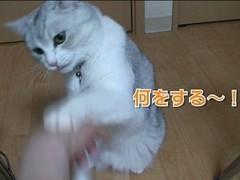 #18 肉球パ〜ンチ/動画