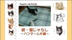 #14 続・猫じゃらし〜ハンタームギ編〜/動画