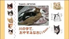 #31 川の字で、おやすみなさいzzzz/動画