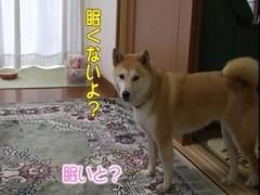 ★可愛い寝顔zZZ…/動画
