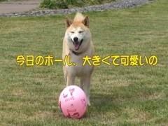 チコのヘディング/動画