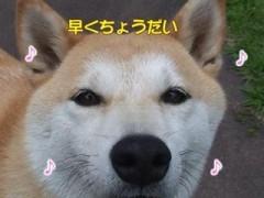 ♪オヤツ・ブルース/動画