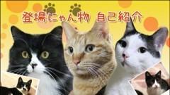 #2 登場にゃんこ紹介/動画