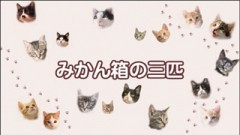 #35 ちゃとらとはちわれ保育園【みかん箱の三匹】/動画