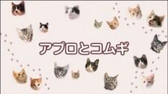 #34 ちゃとらとはちわれ保育園【アプロとコムギ】/動画