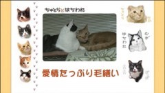 #22 愛情たっぷり毛繕い/動画