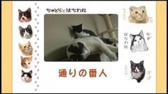 #25 通りの番人/動画