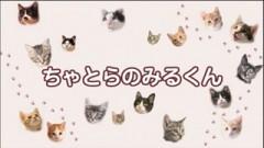 #33 ちゃとらとはちわれ保育園【ちゃとらのみるくん】/動画