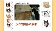 #30 メタボ猫の決断/動画