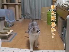#12 うに式エクササイズ/動画