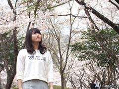 #10 桜咲き誇るかやぶきの里/動画