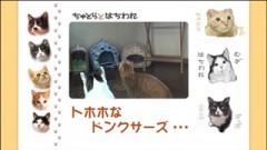 #5 トホホなドンクサーズ・・・/動画