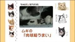 #12 ムギの「肉球超うまい」/動画