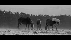 馬ありて/動画