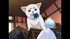 第45話 愛犬の散歩は適度なスピードで/動画