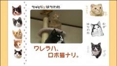 #10 ワレラハ、ロボ猫ナリ。/動画