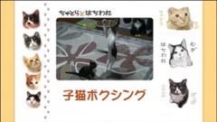 #29 子猫ボクシング/動画