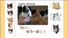 #15 うい〜、もう一杯!!/動画