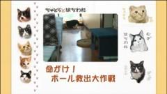 #18 命がけ!ボール救出大作戦/動画