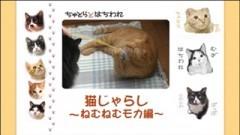#13 猫じゃらし〜ねむねむモカ編〜/動画