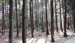 #1 森の中/動画