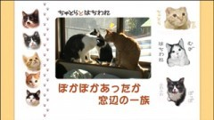 #8 ぽかぽかあったか 窓辺の一族/動画